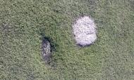 Poškodovana umetna trava